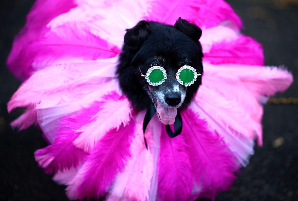 Un cane vestito come Rihanna all'annuale Halloween Dog Parade a New York