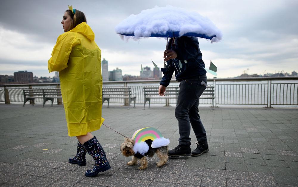 Un cane vestito come un arcobaleno all'annuale Halloween Dog Parade a New York