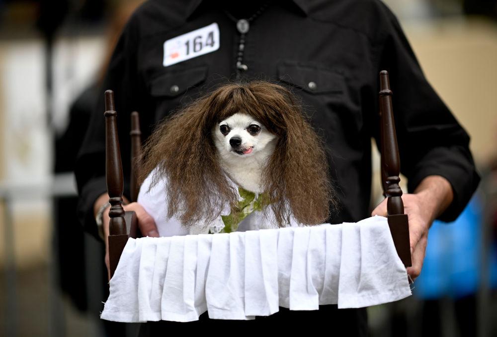 Un cane vestito come Regan del film 'L'Esorcista' all'annuale Halloween Dog Parade a New York, il 20 ottobre 2019.