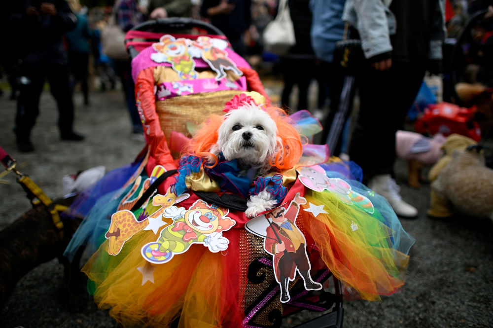 Un cane con un vestito colorato all'annuale Halloween Dog Parade a New York, il 20 ottobre 2019.