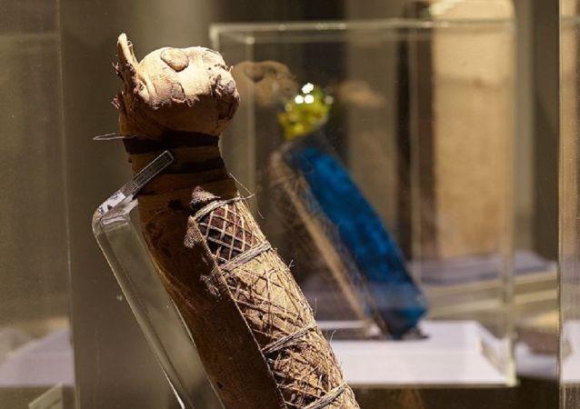 Mummia di un gatto