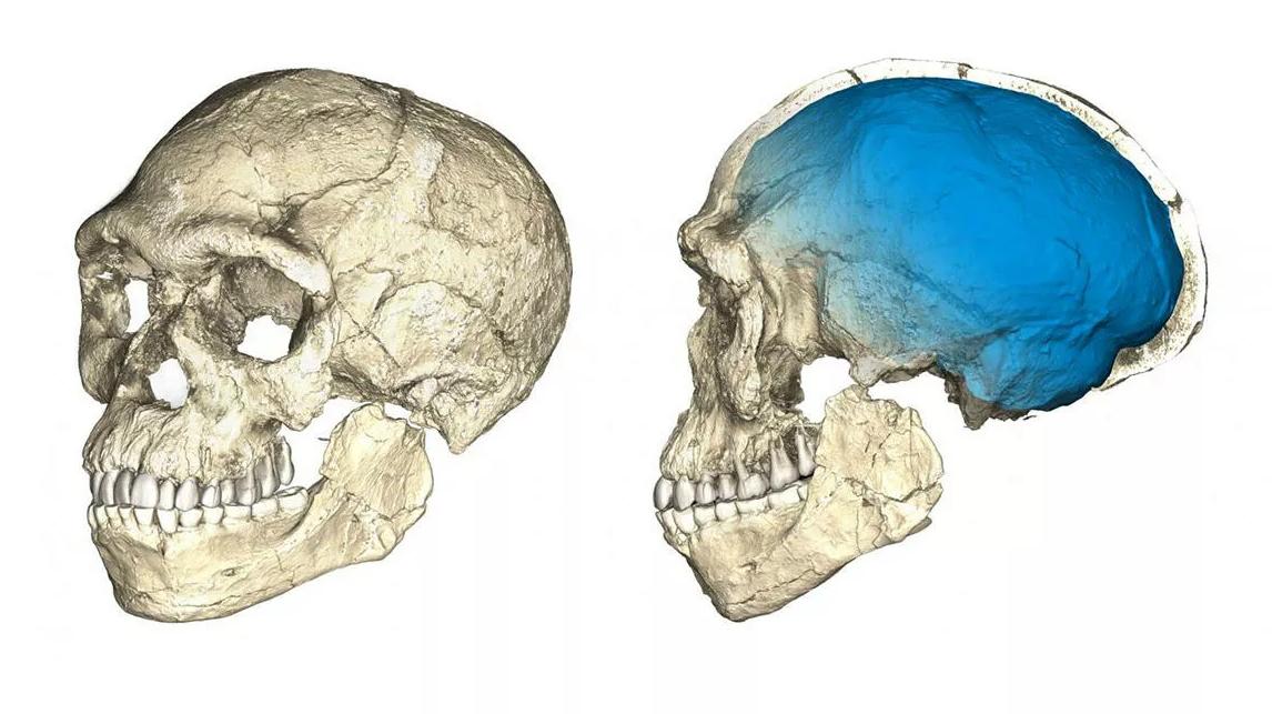 La ricostruzione di un cervello di Homo sapiens dell'antichità, trovato in Marocco nel 2017