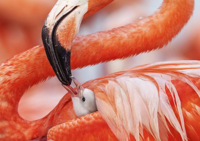 La foto Beak to beak del fotografo messicano Caludio Contreras Koob