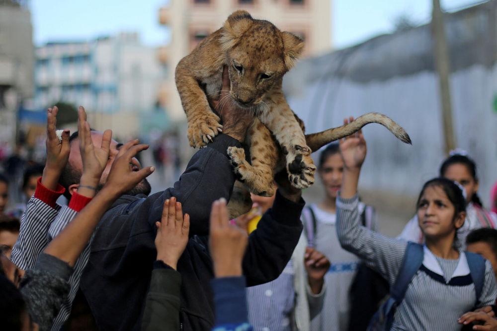 Un leoncino in un campo rifugiati nella Striscia di Gaza.