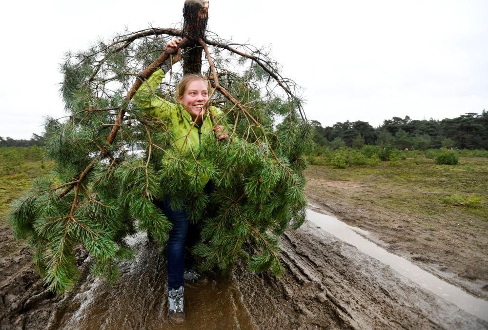 Una donna trasporta il suo albero di Natale dal Parco nazionale olandese De Hoge Veluwe, Paesi Bassi, il 7 dicembre 2019