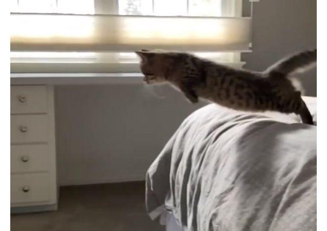 Il salto del gattino