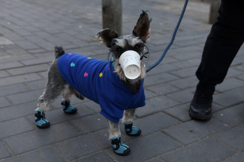 Un cane indossa un bicchierino di plastico a Pechino, Cina