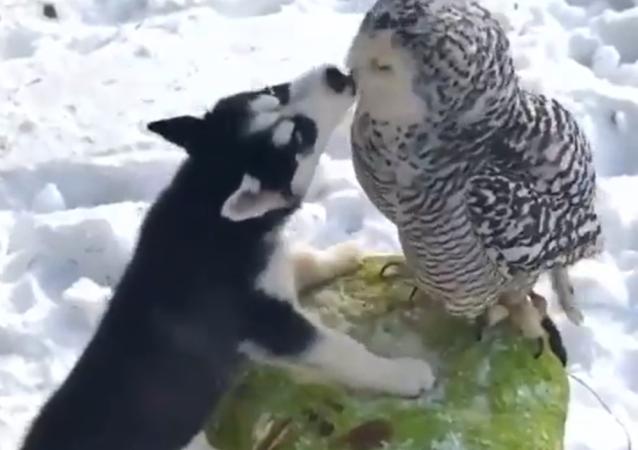 Possono amarsi animali di specie diverse? - Video